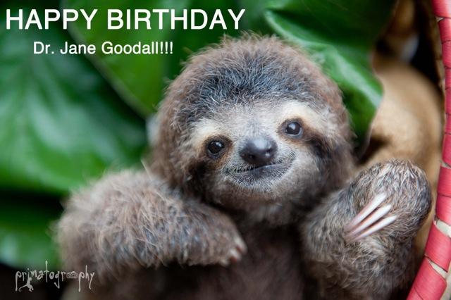Happy Birthday Dr Jane Goodall