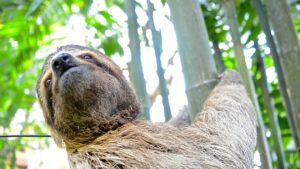 TSI Wild Sloth Health Initiative Program (WISH)