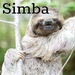The Sloth Institute Adopt A Sloth in Costa Rica - The Sloth